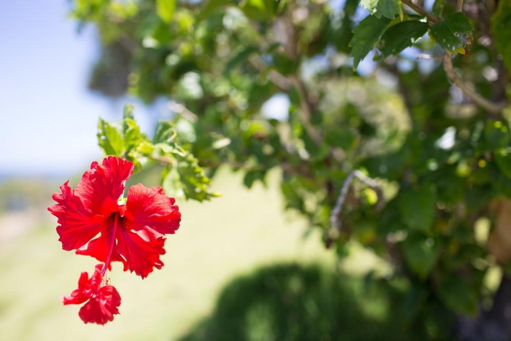 中心から外して撮影した南国の花