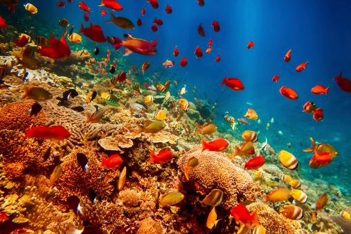 レンボガン島、インドネシア