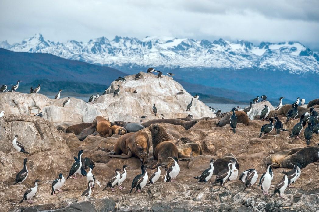 Seabirds and seals in Tierra del Fuego National Park, Argentina