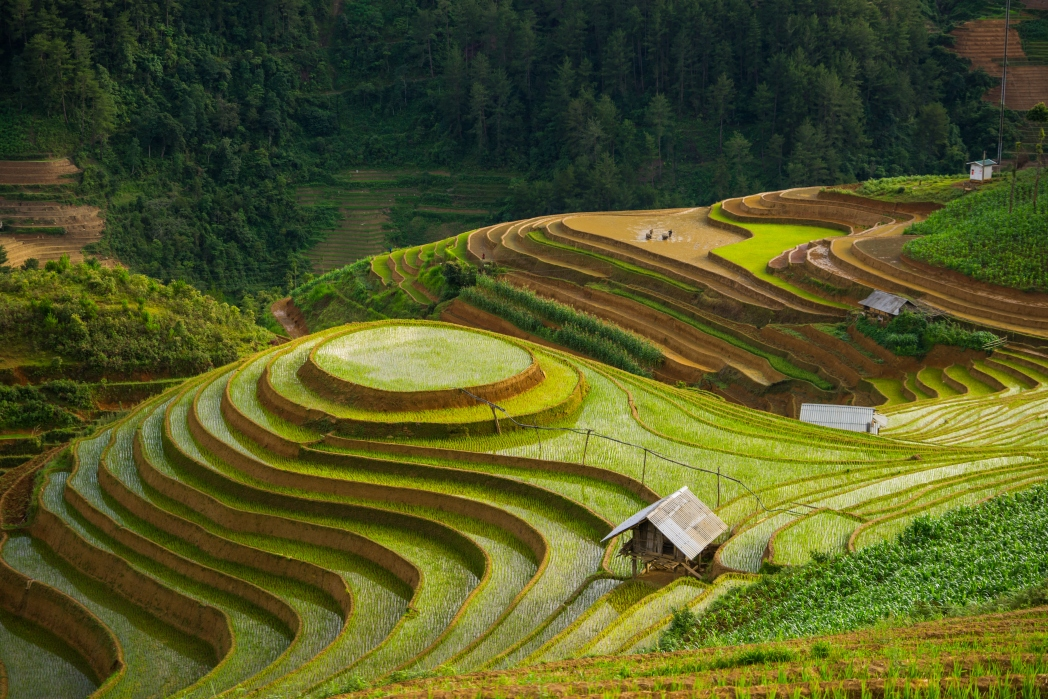 The symmetrical and enchanting rice terraces of Vietnam