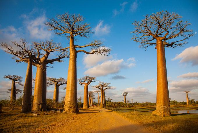 マダガスカルの見どころ | スカ...