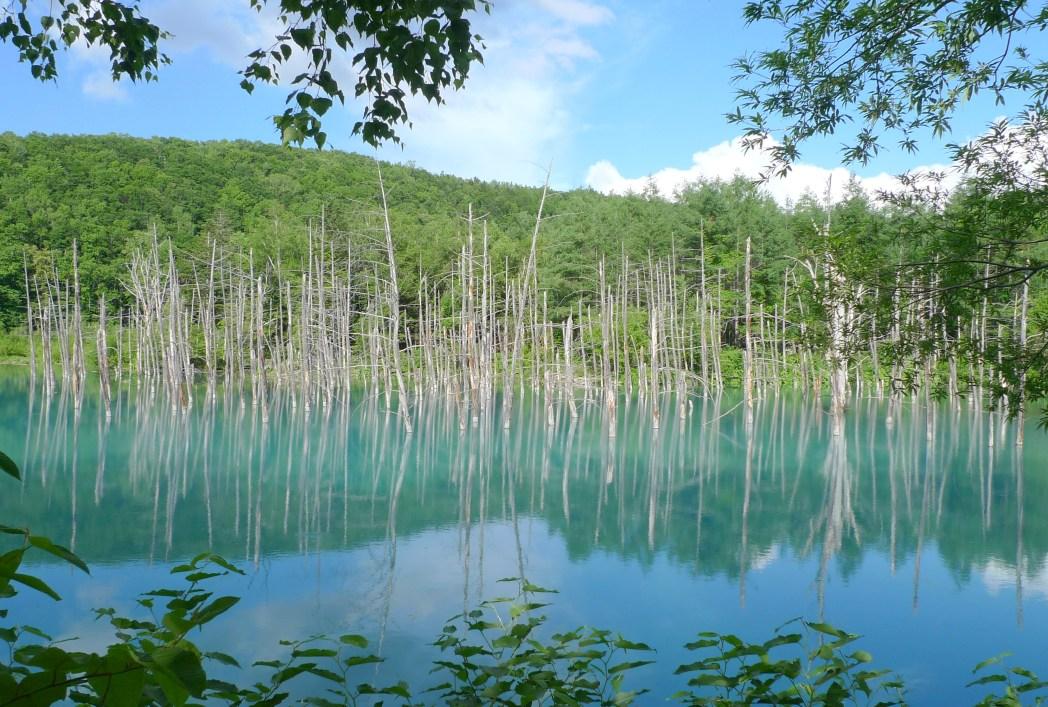 北海道美瑛町の「白金青い池」