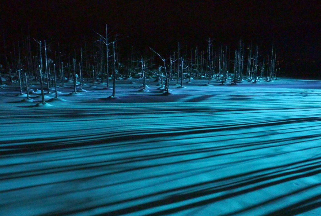ライトアップで雰囲気が変化する青い池