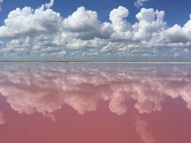 ピンクに染まる塩湖
