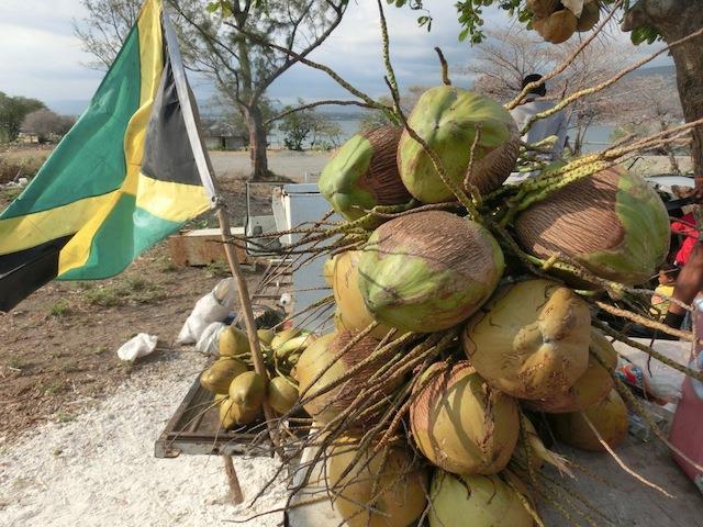 中身はプルプルの果肉のココナッツ
