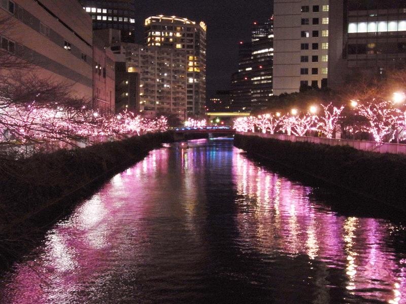 42万個以上の桜色のLEDが輝く