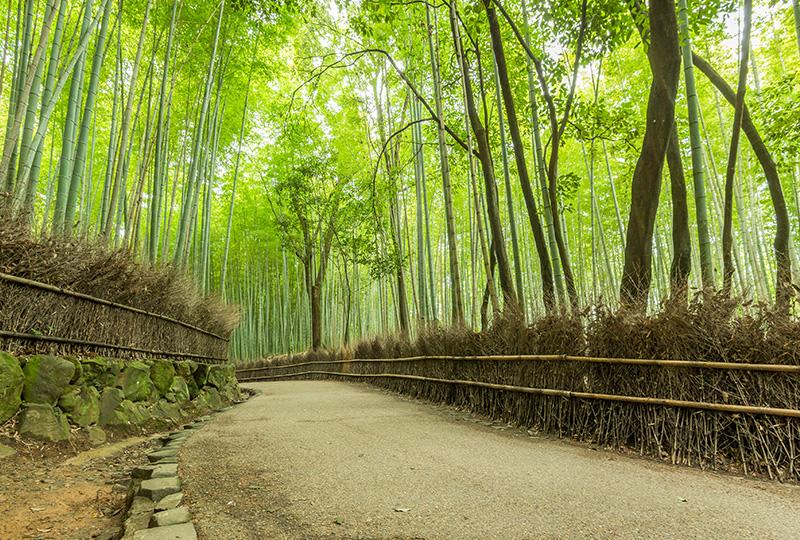 笹の葉が揺れるサラサラとした音が京都に来たことを感じさせてくれる、嵐山・嵯峨野の竹林
