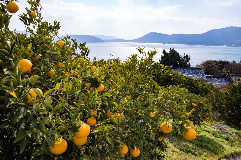 柑橘類の生産が盛んな小さな島