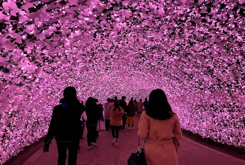 光のトンネル「桜~さくら~」春