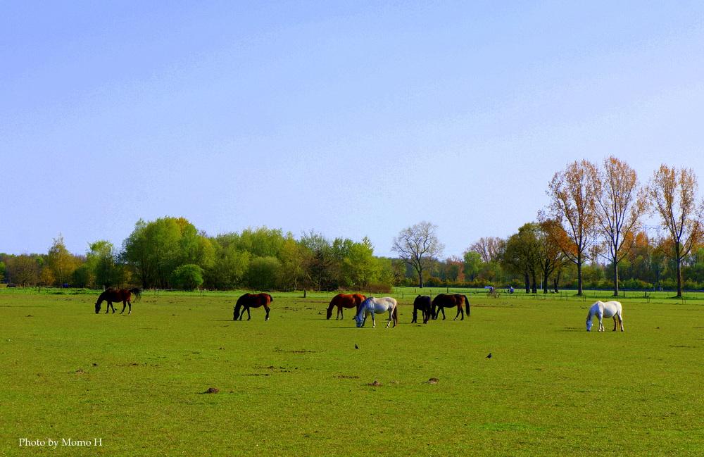 のんびりと過ごす馬や羊の群れ