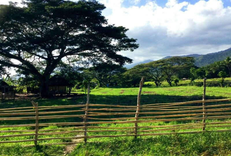 パラワンの田園風景を楽しみながらのドライブ