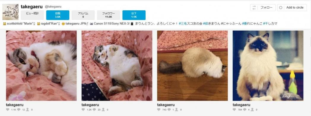猫、takegaeru