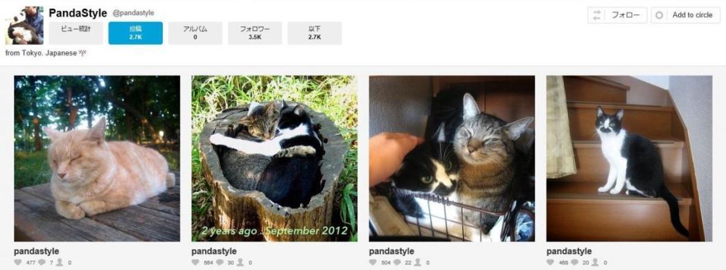 猫、PandaStayle