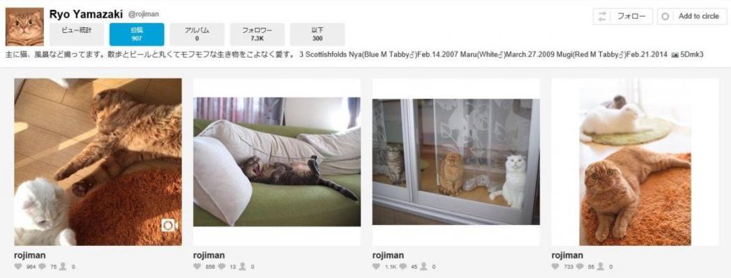 猫、Ryo Yamazaki