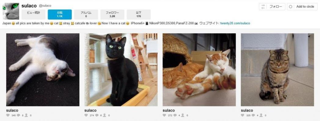 猫、sulaco