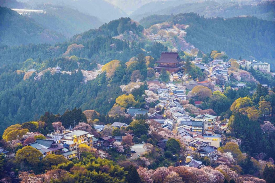 吉野山、桜