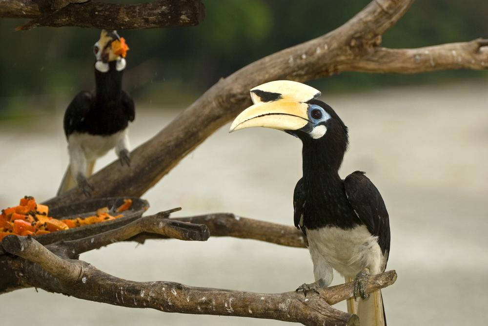 美しい野鳥たち