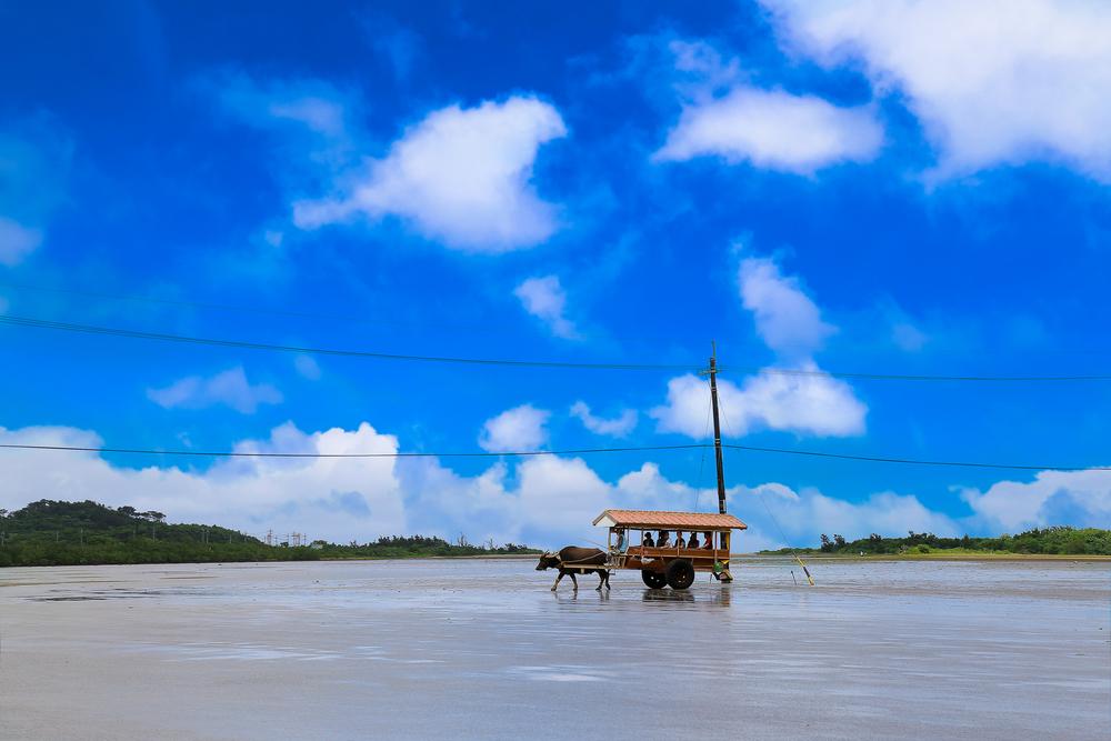 由布島へは水牛車に乗って