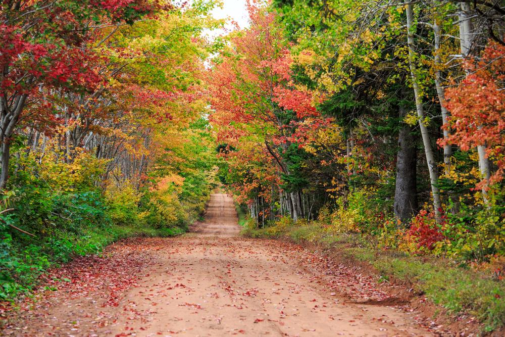 プリンスエドワード島の紅葉も魅力的