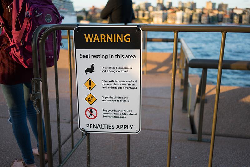 野生のアシカが頻繁に現れるシドニー湾