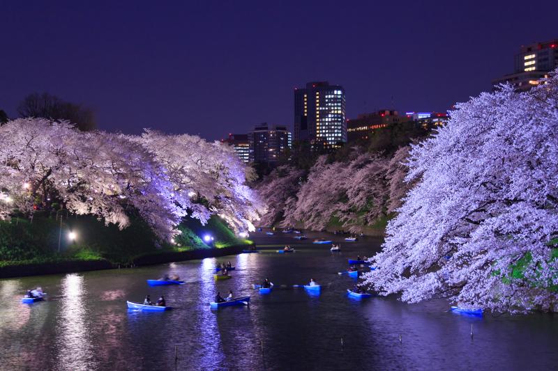 桜がライトアップされる「さくらまつり」も必見