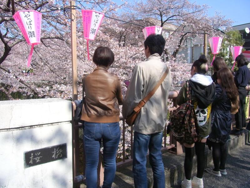 桜の花と一緒に写真撮影がしやすい