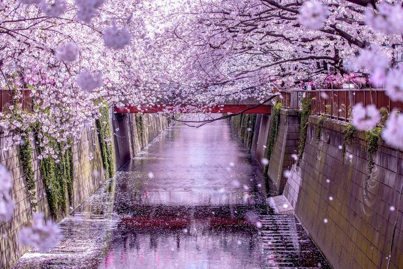 目黒川ならではの桜の楽しみ方