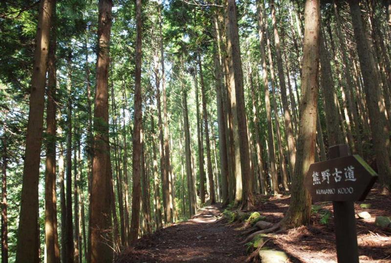 奈良時代からメインルートだった中辺路