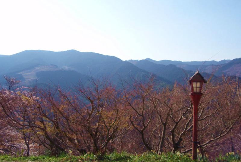 熊野古道人気の中辺路(なかへち)からの景色