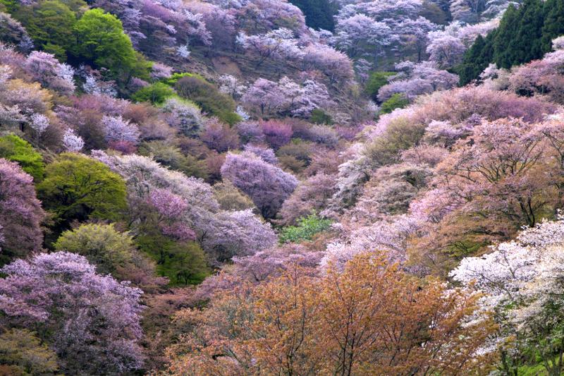 桜色と緑のパッチワークのよう